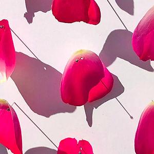 Petal Series: Rose 1 by Mimi Czajka Graminski
