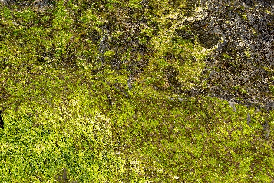 Seaweed Rhythm, a photograph by Linda Greenhouse