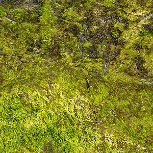 Seaweed Rhythm by Linda Greenhouse