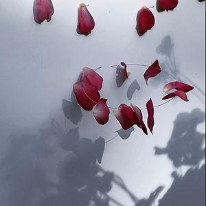 A Tenderness, A Whisper, Petals for Pauline, a video by Mimi Czajka Graminski