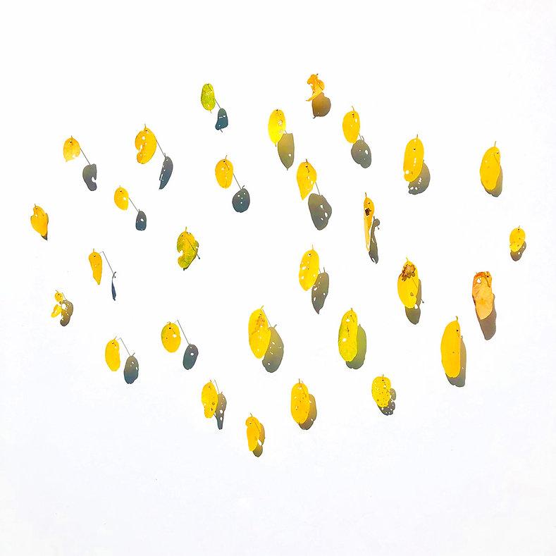 Locust Leaf Series 1 by Mimi Czajka Graminski