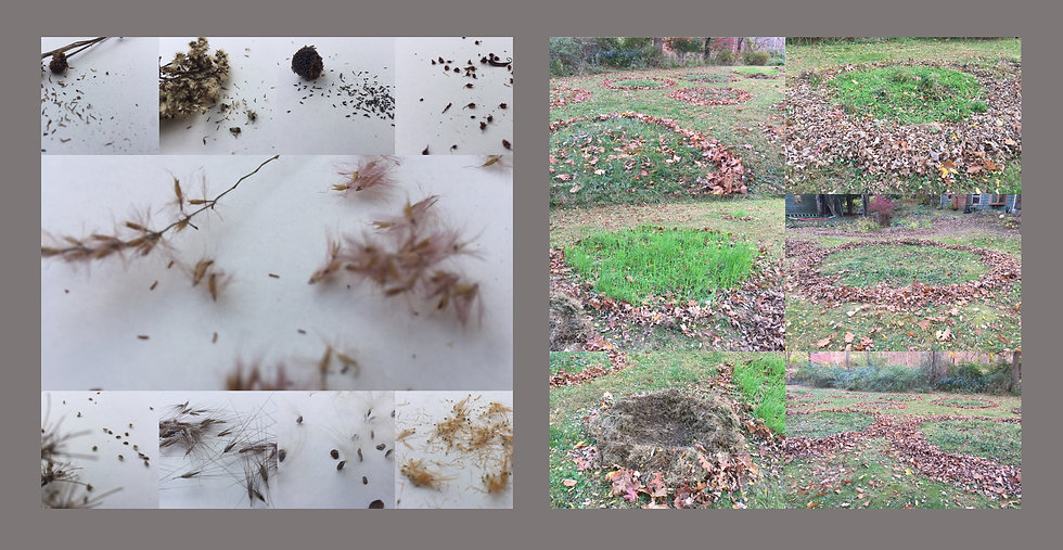 Native Seeds 2020 & This Is Not A Lawn, photographs by Riva Weinstein