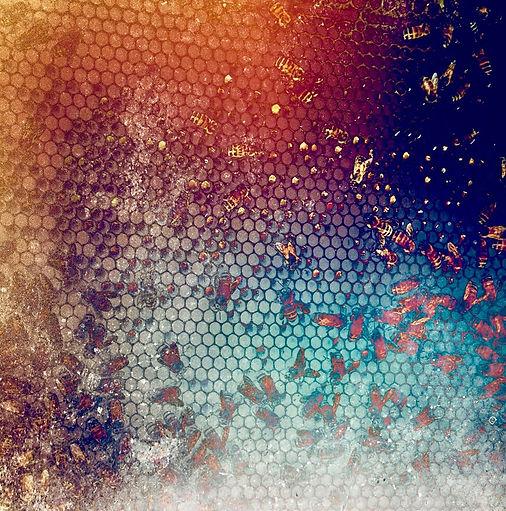 18_Connito_Autumn Hive.jpg
