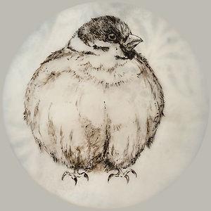 #13: Fluffed Up / Aufgeplustert, a drawing by Bärbel Thiel
