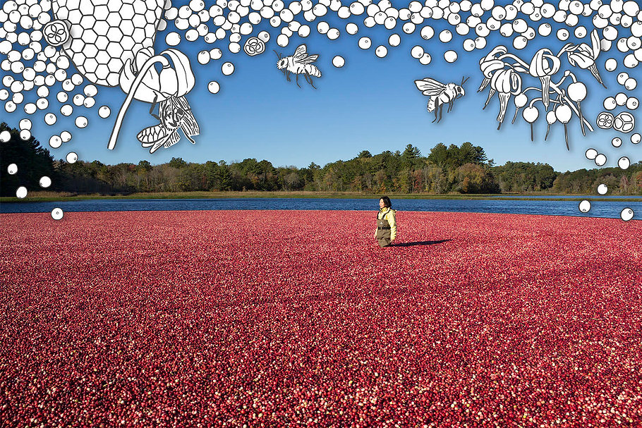 #29, Cranberry Bog, a collage by January Yoon Cho.jpg