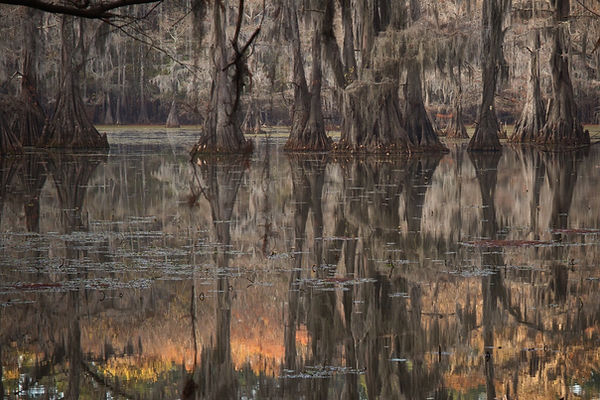 Caddo Swamp