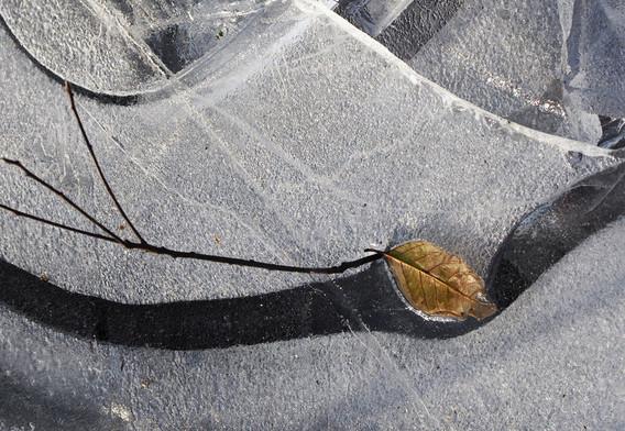 HM - Frozen Leaf