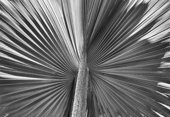 2nd: Palm Perfect