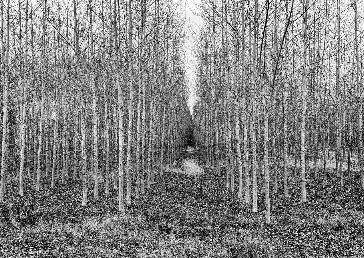 Tree Farm in Cathlamet, WA