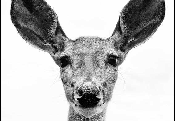 3rd: Oh Deer