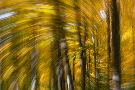 Fall Impressions 3