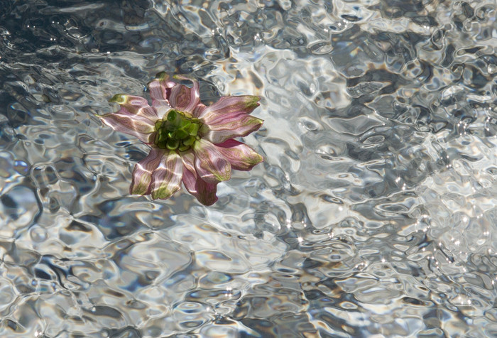 2nd Flower In Turbulent Water