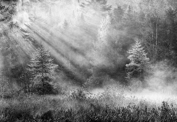 1st: Magic in the Mist