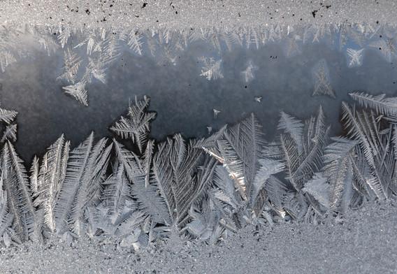 HM-Winter Window Garden