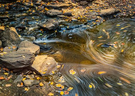 Autumn Leaf Swirls