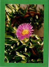 Christmas cactus card.jpg