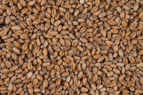 Пшеница для проращивания, 100 г