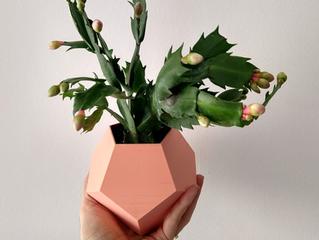 Saiba mais sobre a Flor de Maio