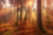 johannes-plenio-629984-unsplash.jpg