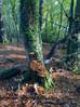 Wonderful Woodland Walk