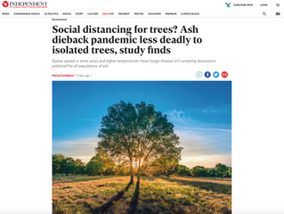 Here's a timely and interesting follow-up to the previous post relating to Ash die-back