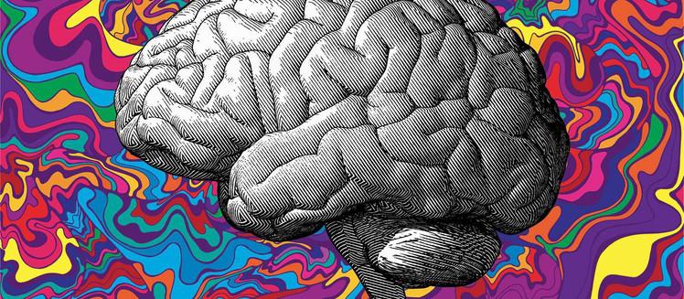 Menenjit Hastalığında Toll-Like Reseptörlerin İşlevi