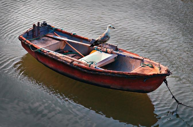 Fishing rowboat with seagull, Honduras