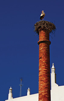 White Stork nesting atop a chimney in Portugal