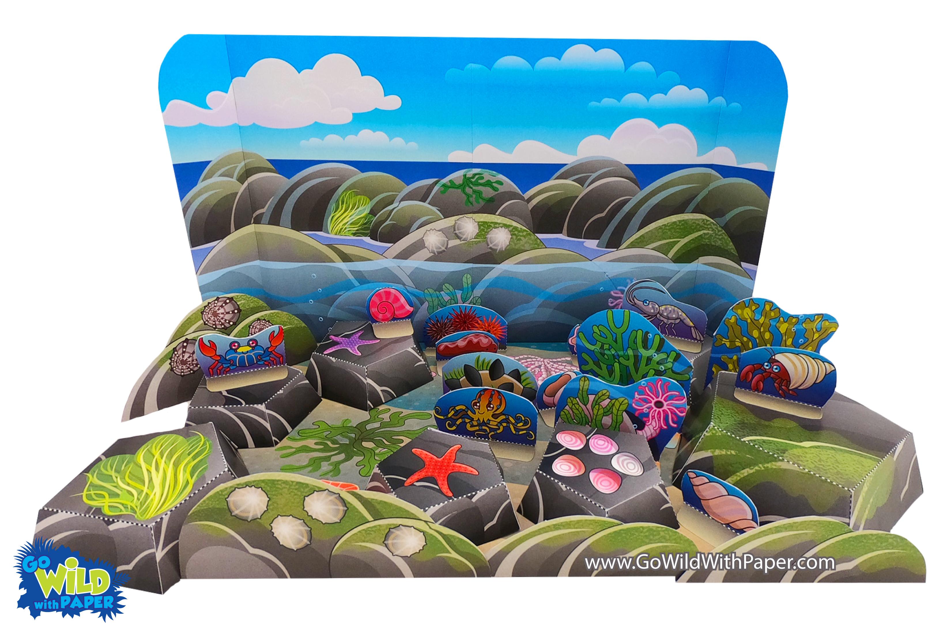 Rock Pool / Tide Pool Diorama