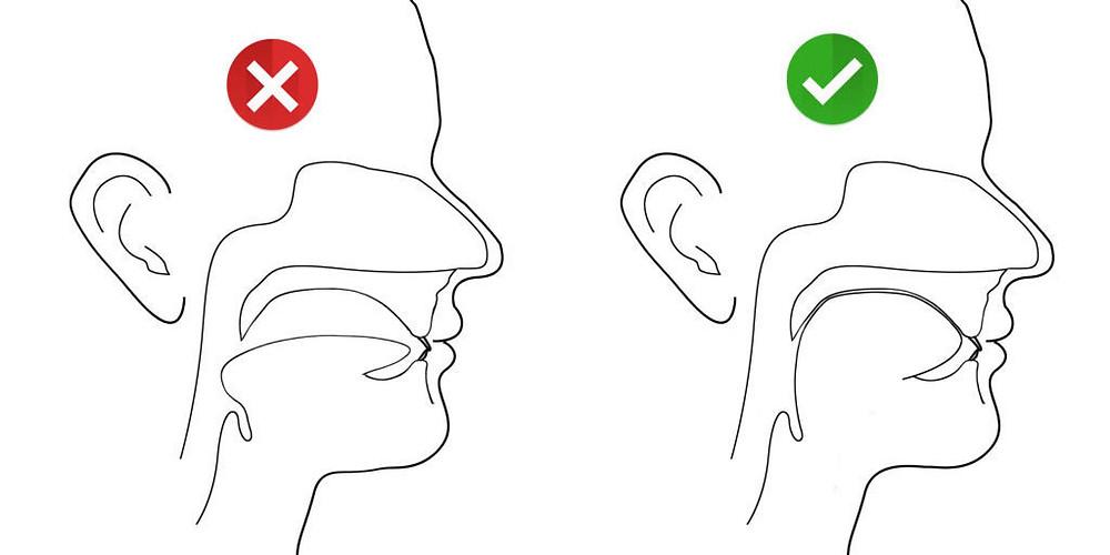 Au repos la langue est positionné au palais sans contact avec les dents