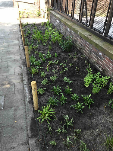Community garden project Donarstraat