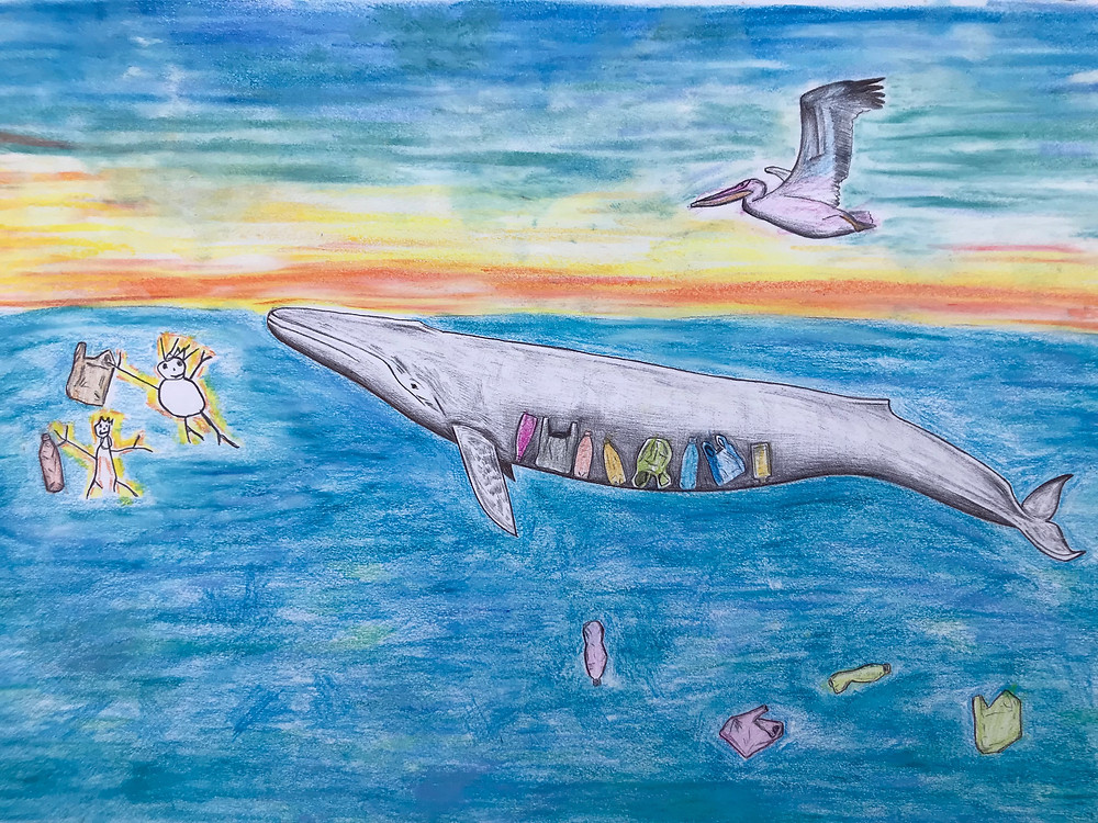 Whale plastic pollution