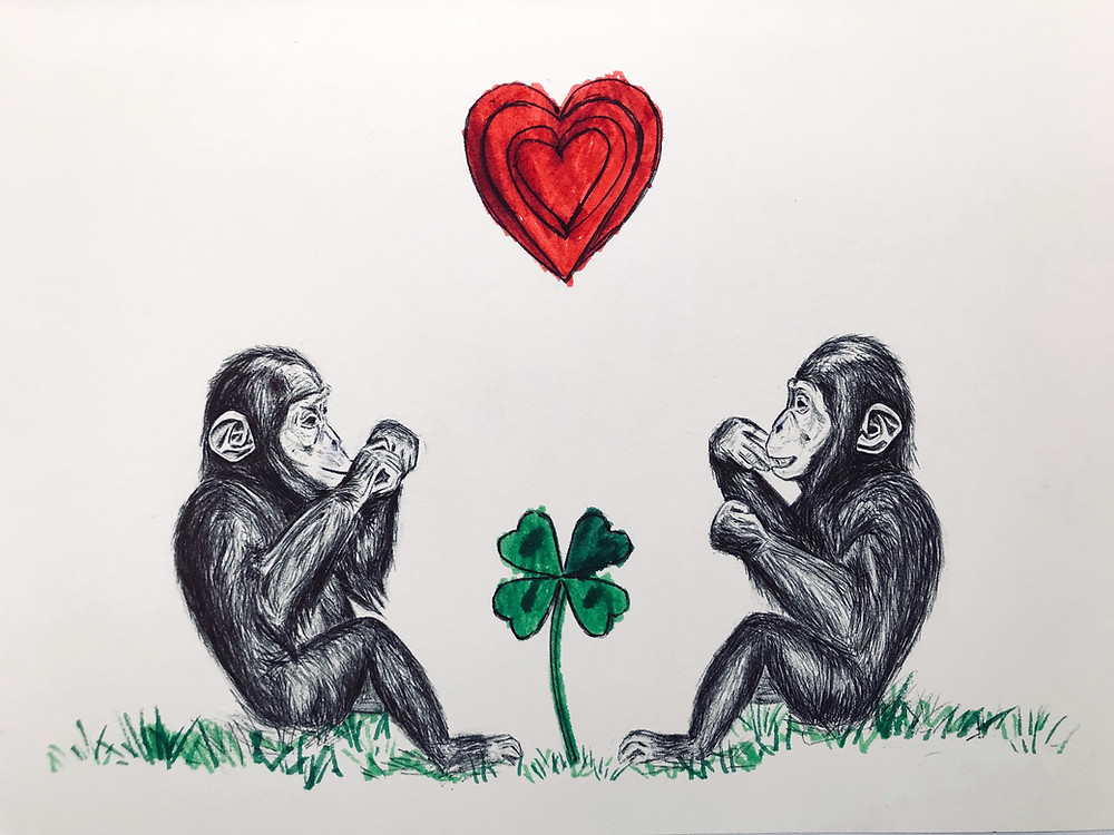Chimpanzees with heart and four-leaf clover