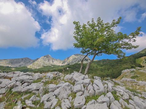 WILD STORIES OF ABRUZZO Part 2: The encounter