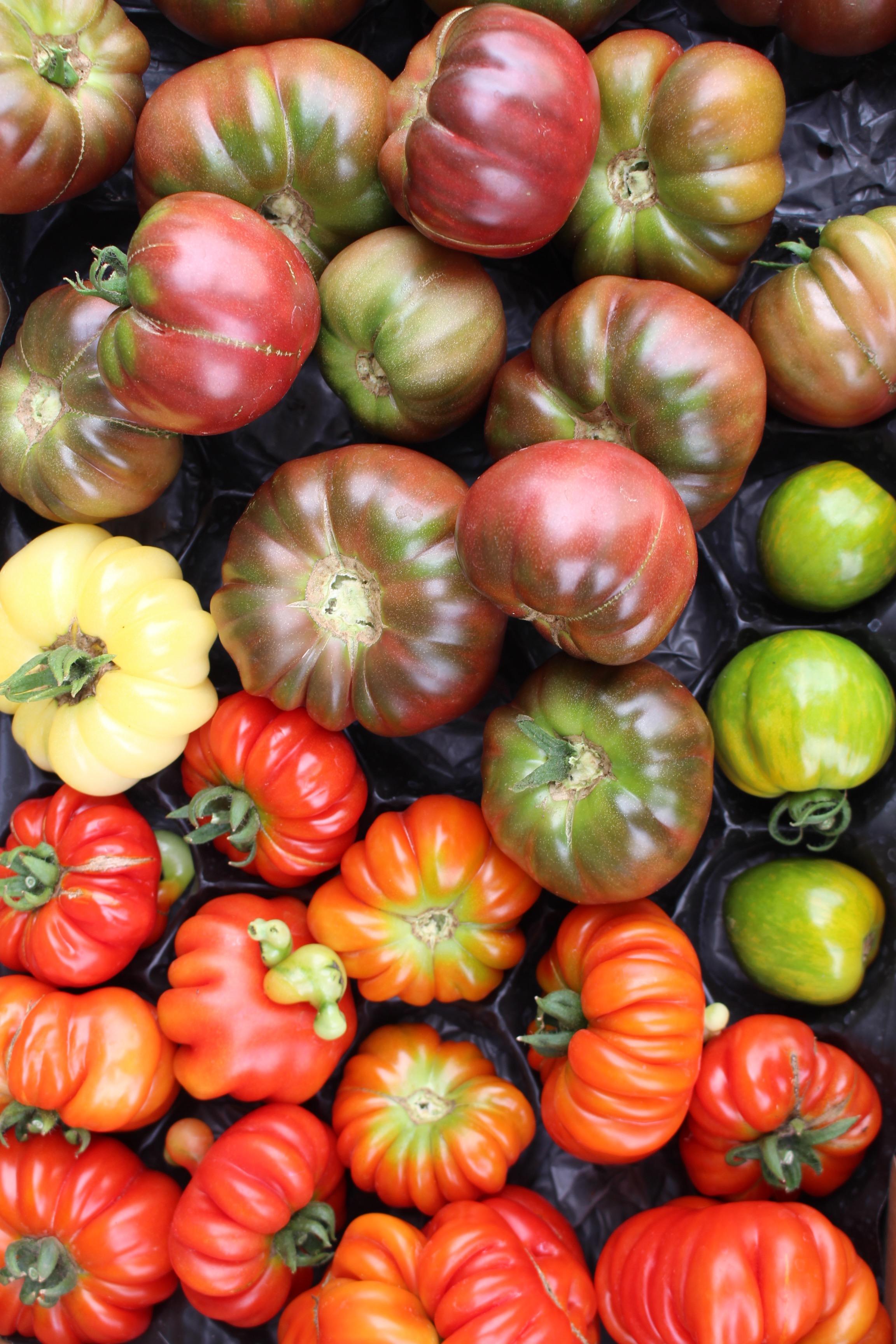1607 tomates diverses2