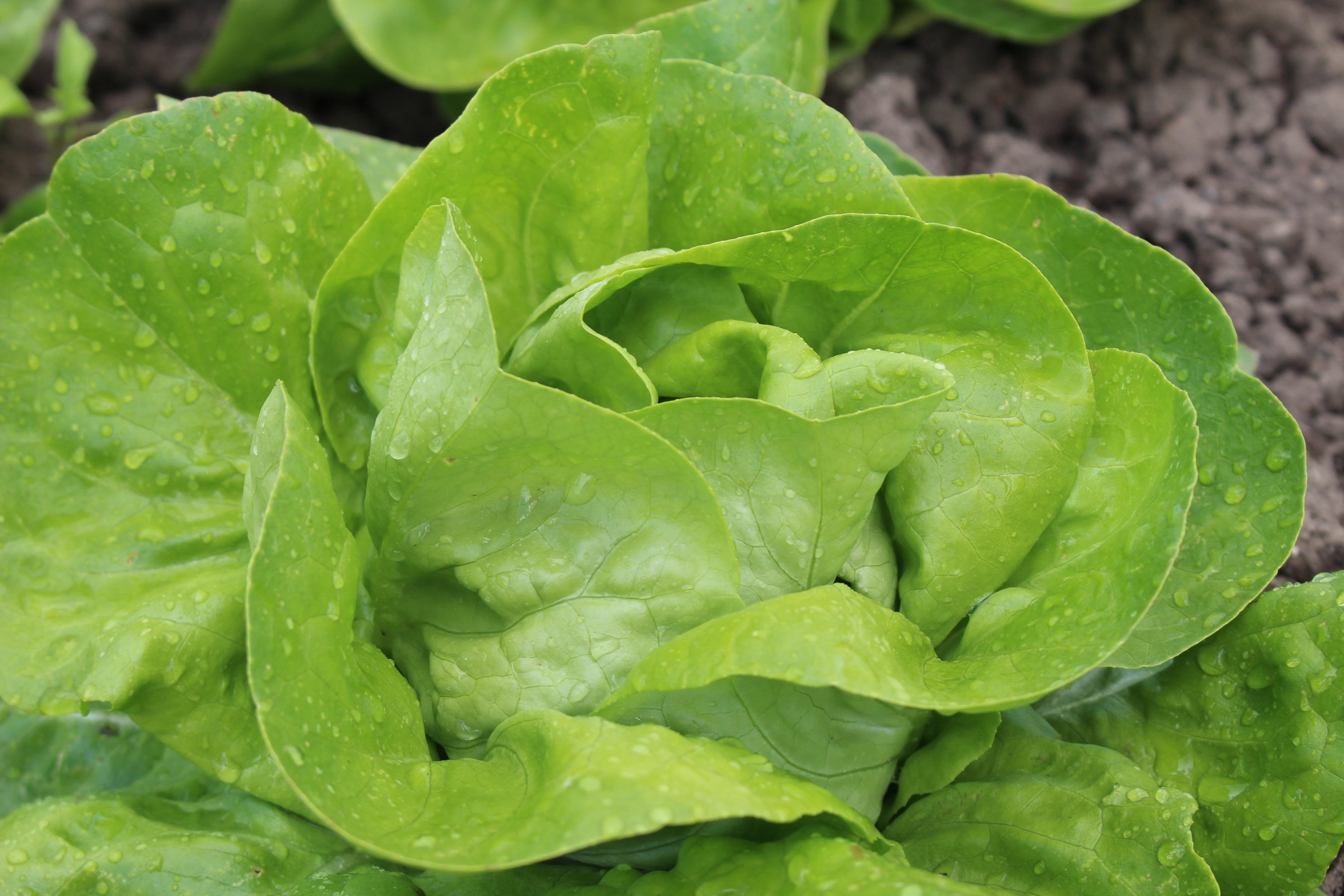 1607 salade C6