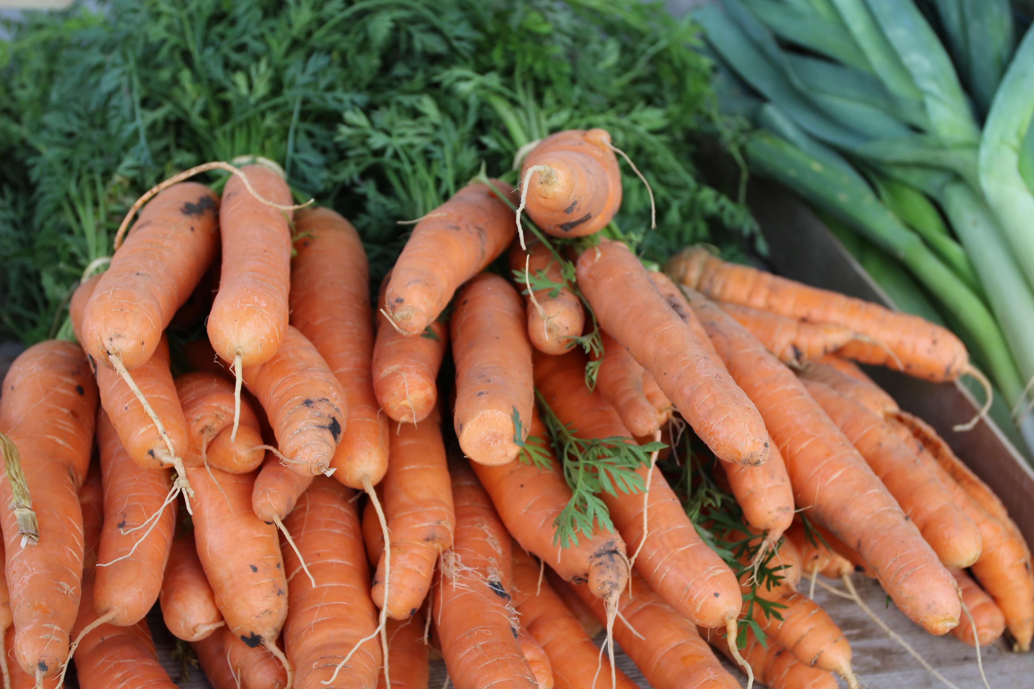 carottes2 - copie