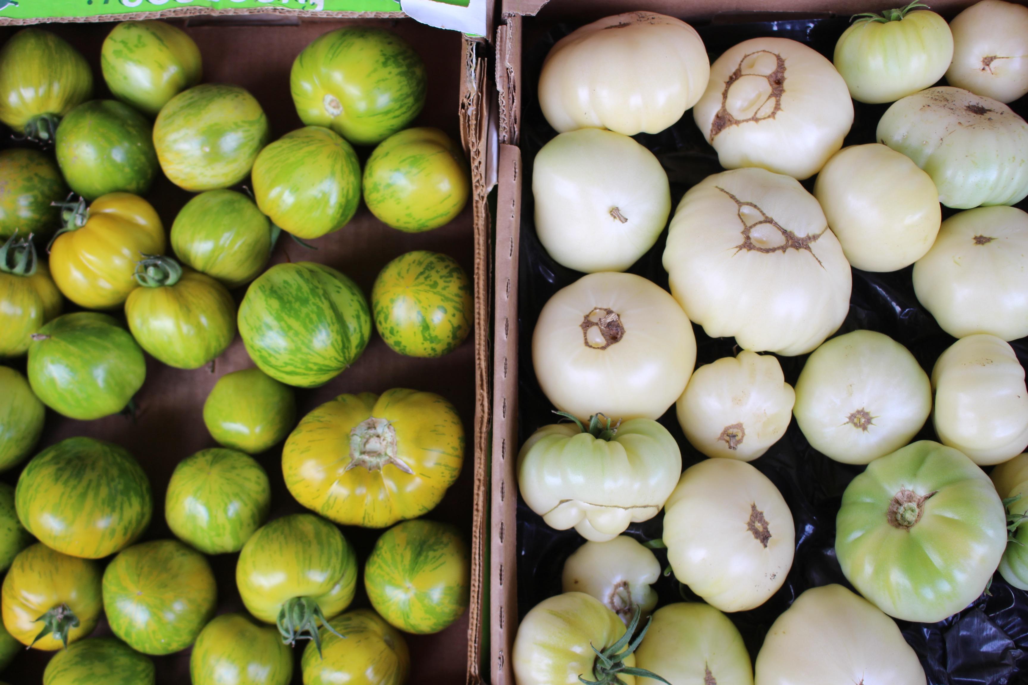 Tomates - copie