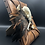 Thumbnail: Raccoon Skull & Bones Framed Mount
