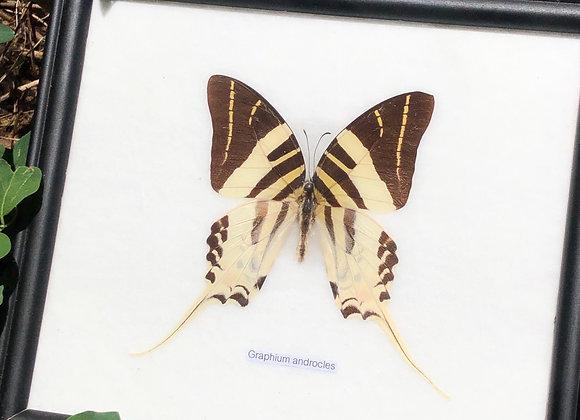 Vintage Butterfly Specimen Collection - Set of 4