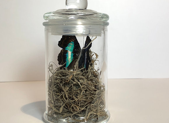 Mini Apothecary Specimen Jar with Butterfly