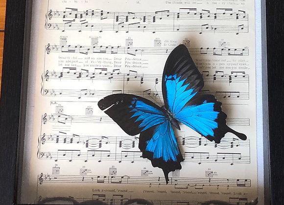 Dear Prudence Butterfly Framed Art