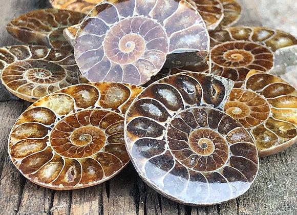Small Ammonite Fossil Half