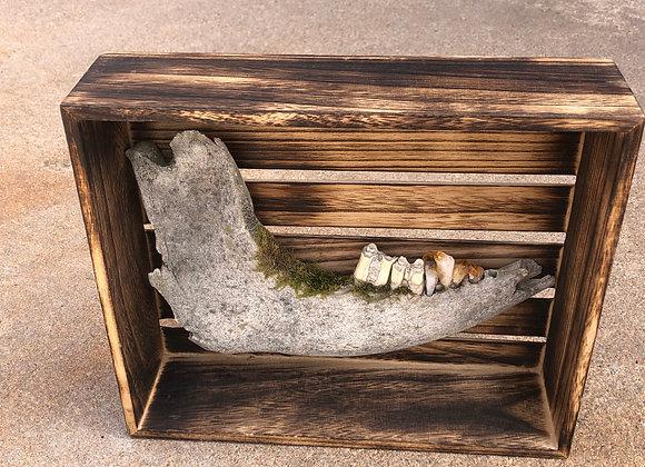 Buffalo Jaw Bone Box