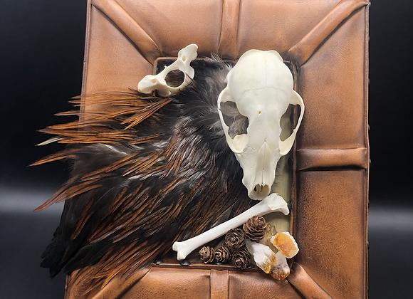 Raccoon Skull & Bones Framed Mount