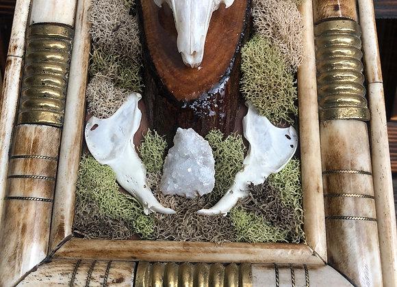 Framed Rabbit Skull