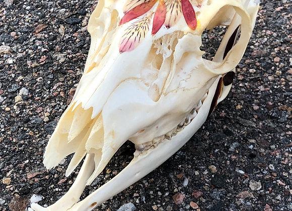Flowered Deer Skull - Lily of the Incas