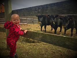 Hank & Cattle.jpg
