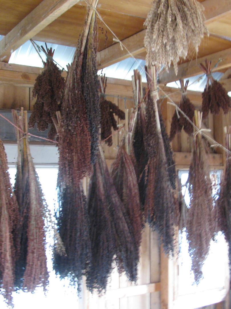 sorghum hangs in granary.JPG