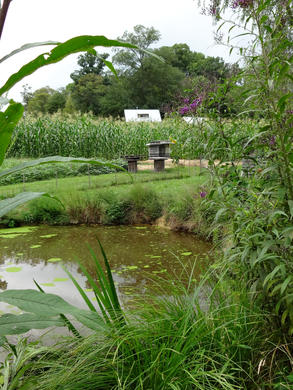 duckpond view to field_house.JPG